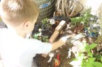 William playing with the fairy animals